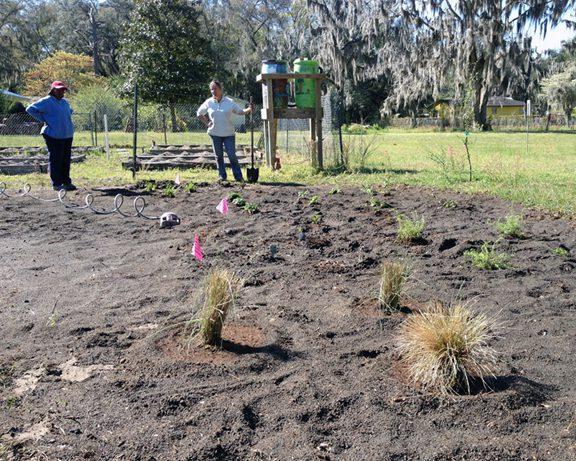 Thelmas Garden 3-24-16-2-72